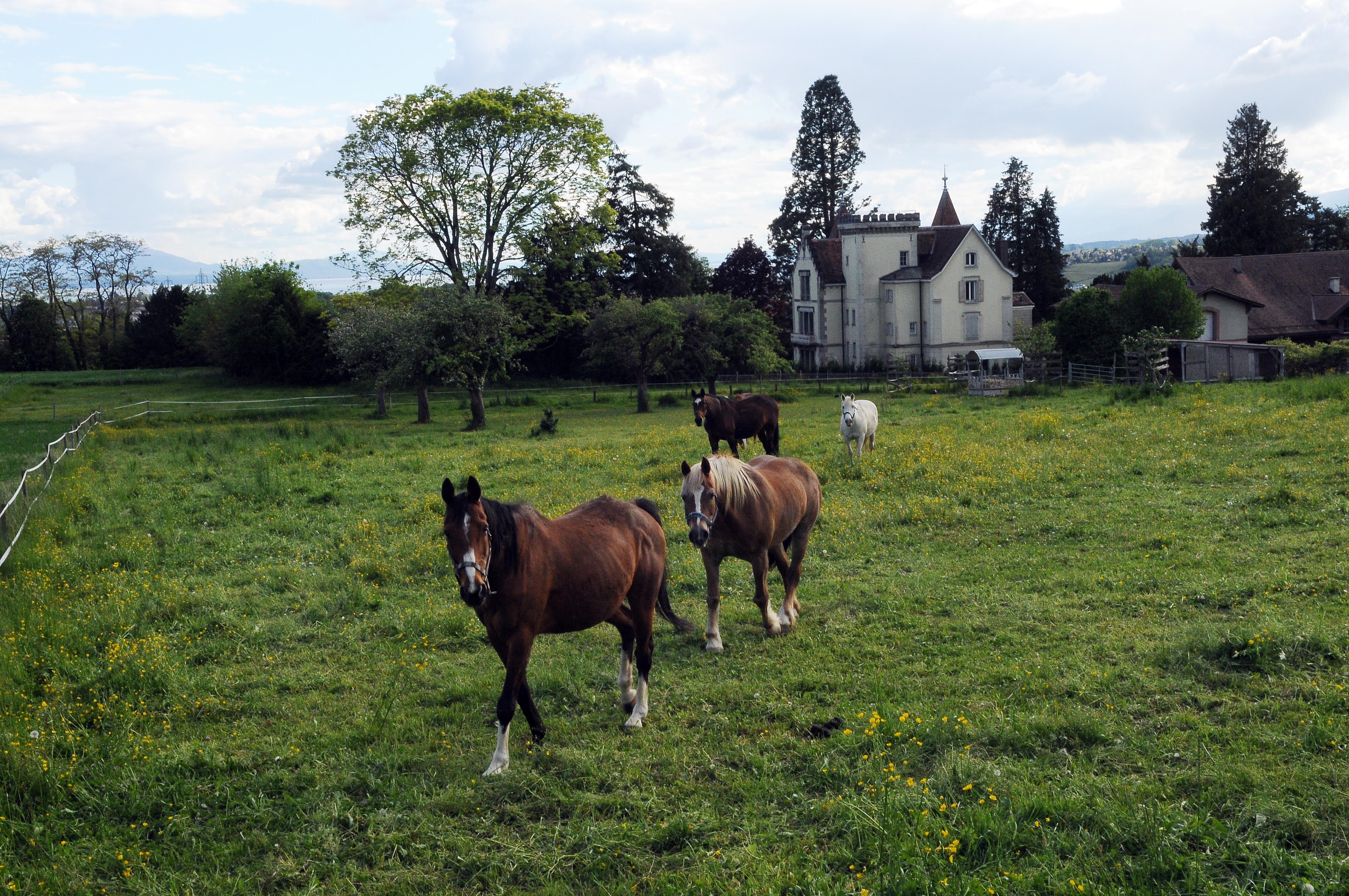 château de Crissier